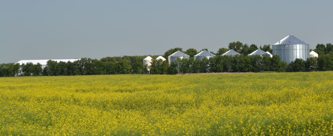 Canola_farm_2012