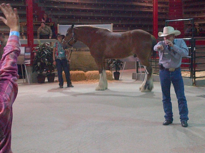 Pretending to auction off a horse.