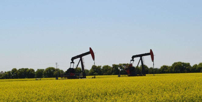 Pump jacks surrounded by canola. Pump jacks in fields are a common sight in parts of Alberta.