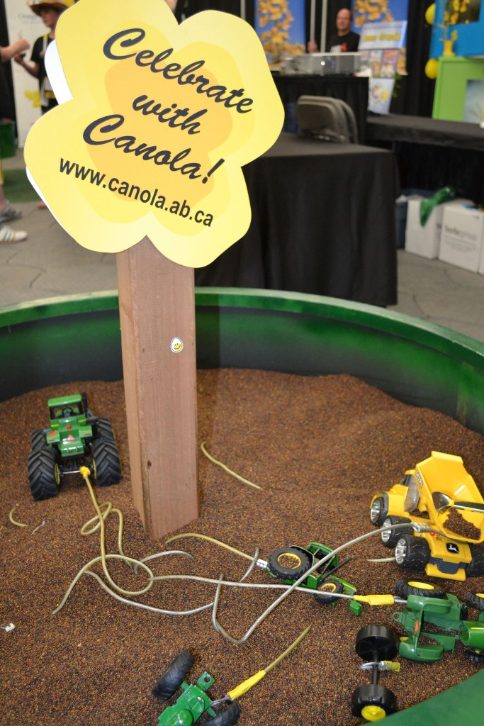 Playing in the sand, I mean, canola!