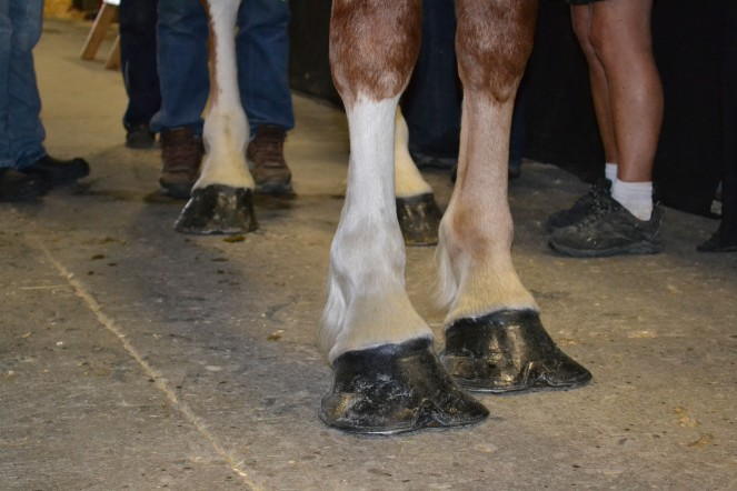 These hooves are made for walking...