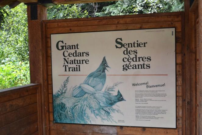Giant Cedars boardwalk trail.