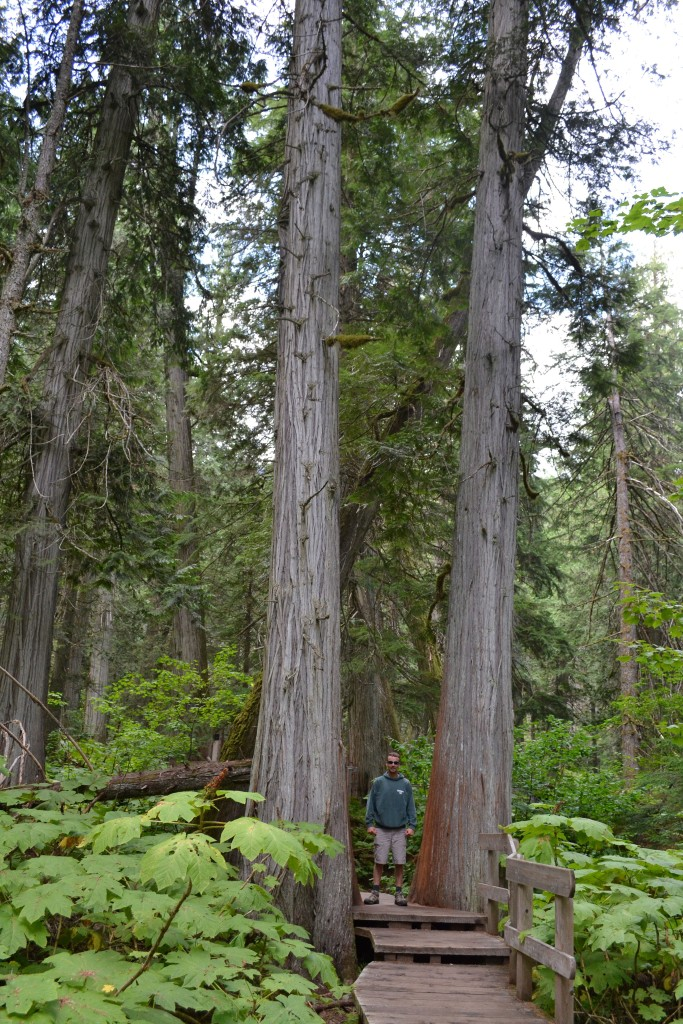 Keith looking tiny between two huge trees.