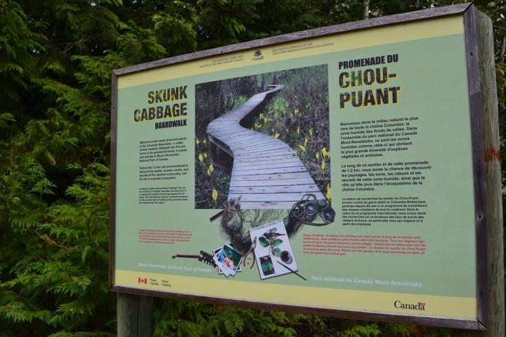 Skunk Cabbage boardwalk trail.