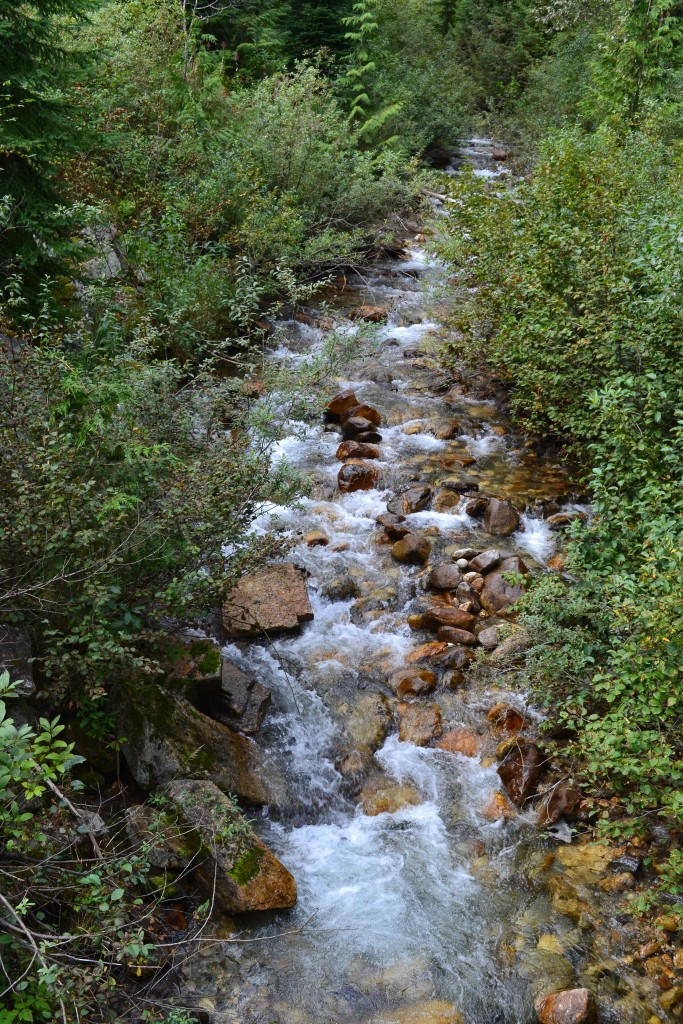 A small stream along the trail.