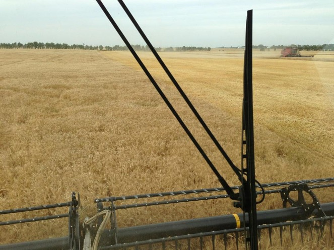 The view from the cab of the combine.