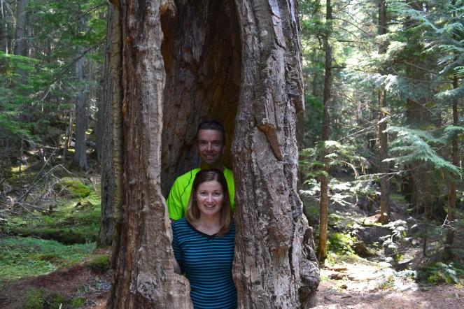 In a tree in Glacier National Park.