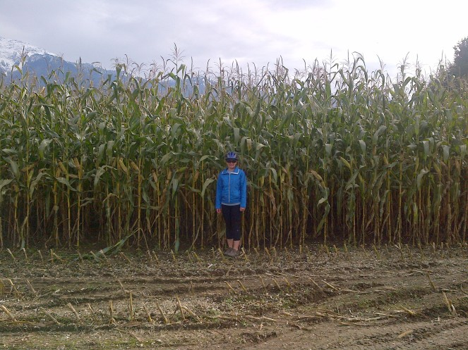 My 5 foot 4 inch frame beside 12 foot corn in BC's Fraser Valley.