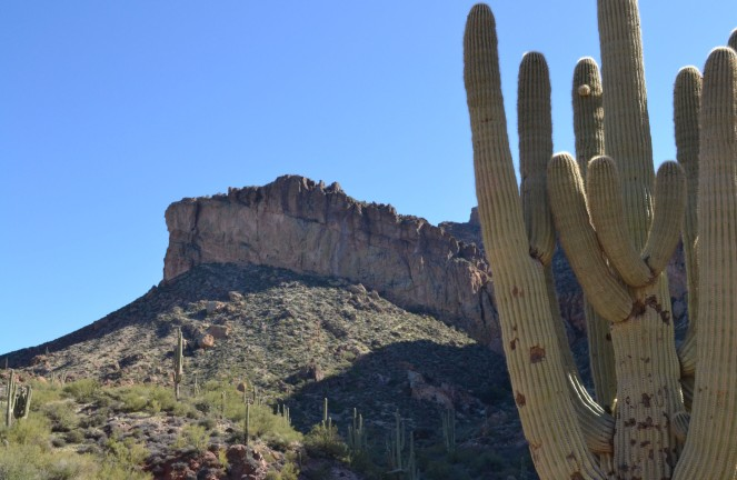 There were cacti everywhere along Apache Trail.