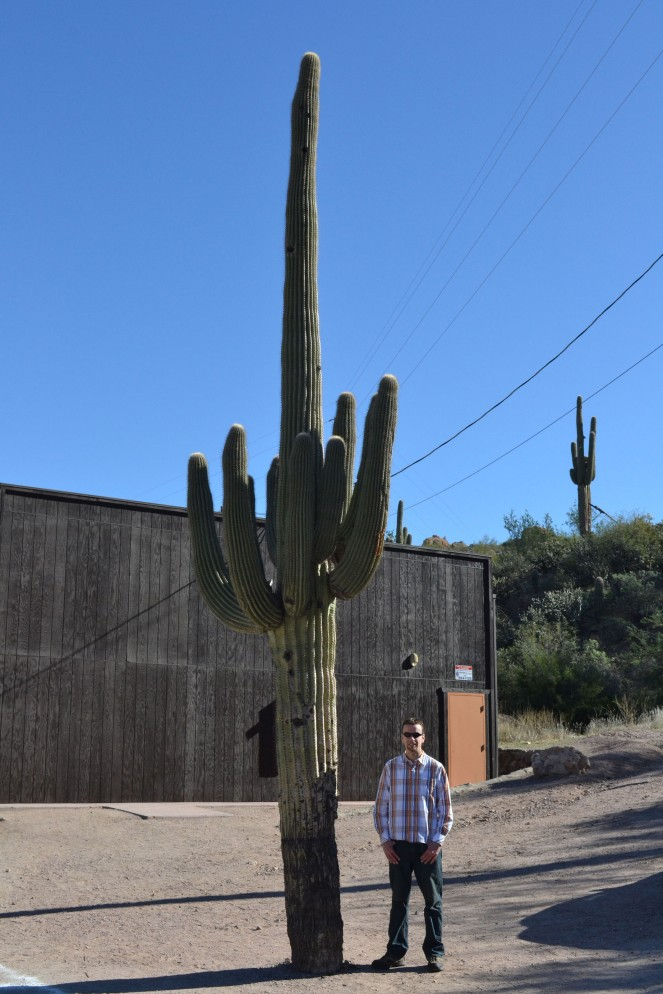 Looking very small next to this huge cactus.