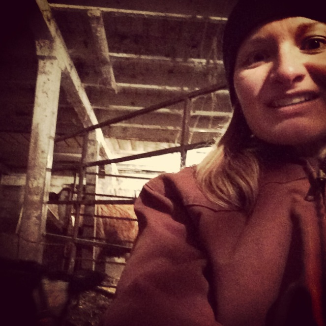 #felfie in the barn with the cows and calves.