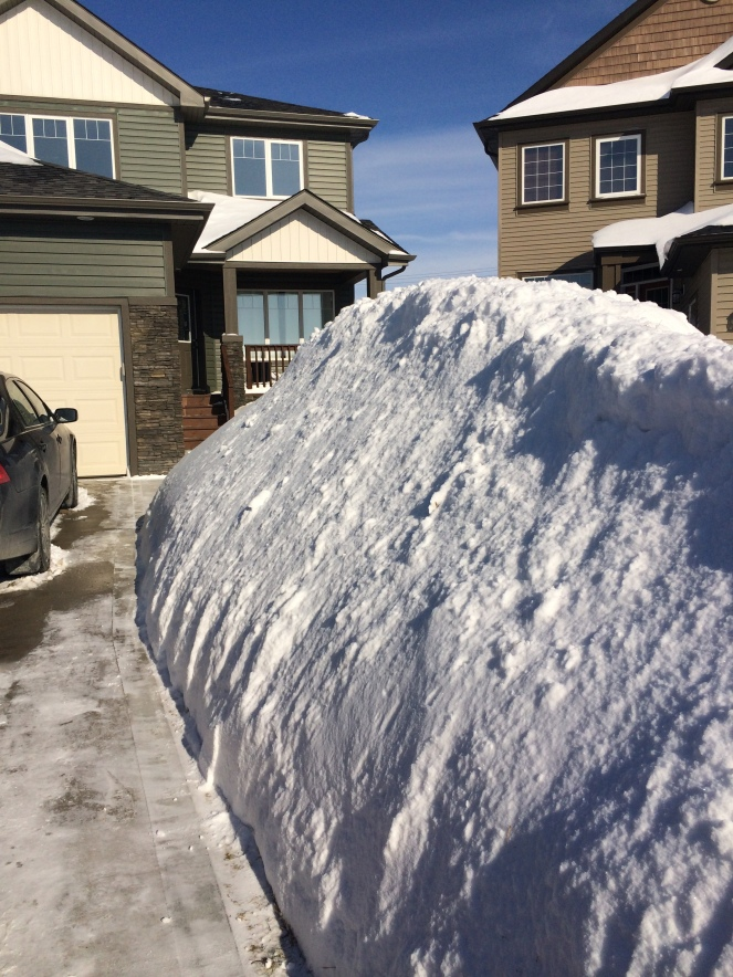 Piles of snow in Winnipeg.