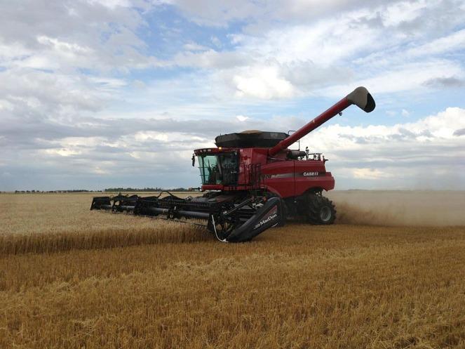A combine in a wheat field.