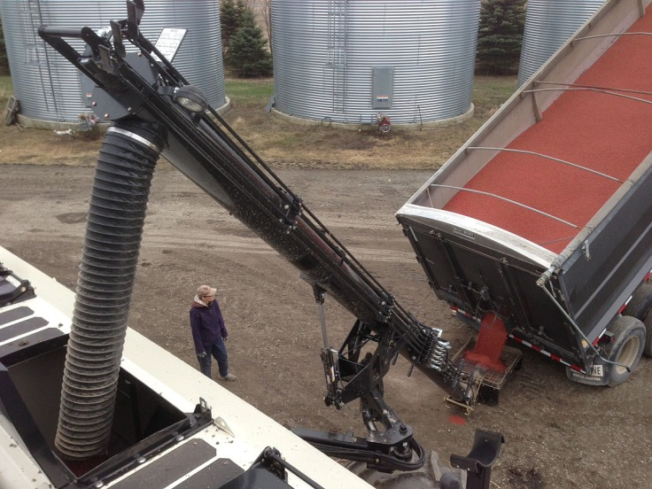 Loading wheat seed into the air seeder. The wheat seed is red because it's been treated with a seed treatment that will help protect the seed from disease and insects, and provide stronger and faster emergence.