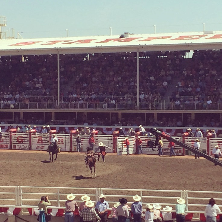 Rodeo action!