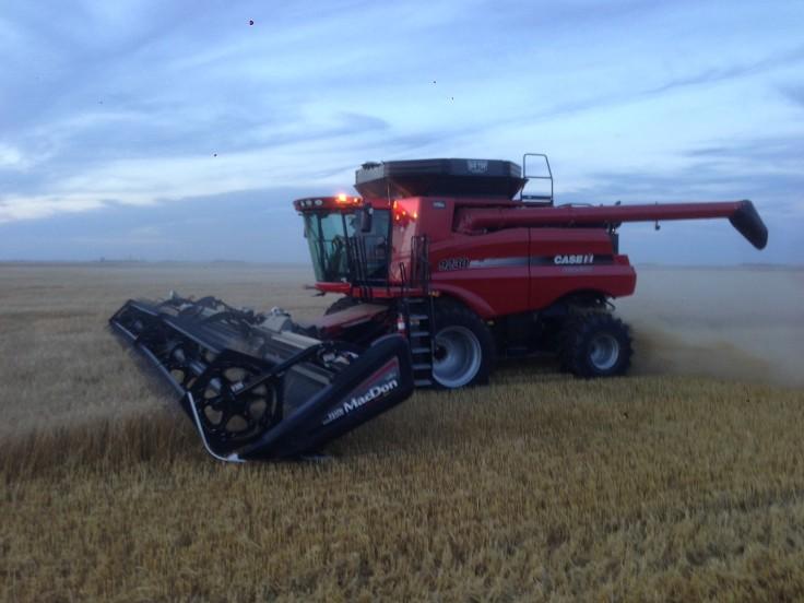 Wheat harvest on my family farm.
