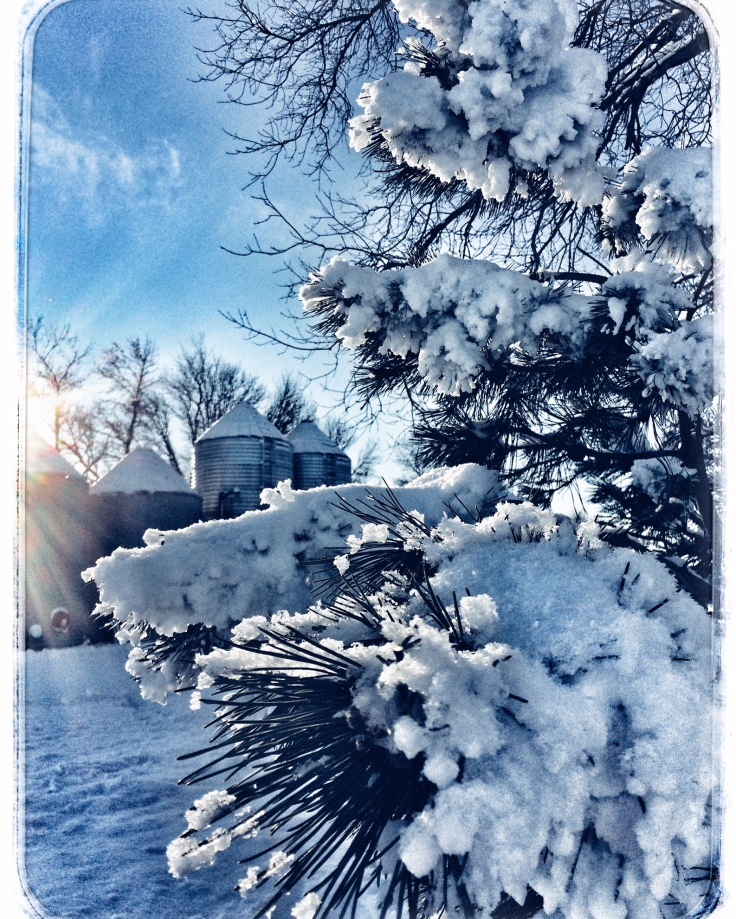 FarmWinter_Dec2015